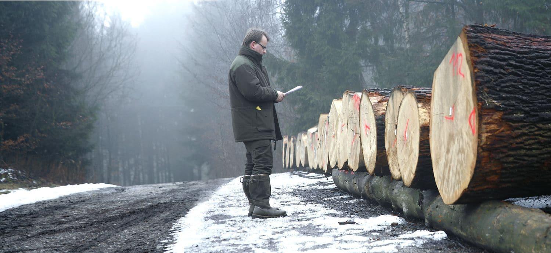 Johannes Sudbrock sucht die heimischen Hölzer im Wald höchst persönlich aus.